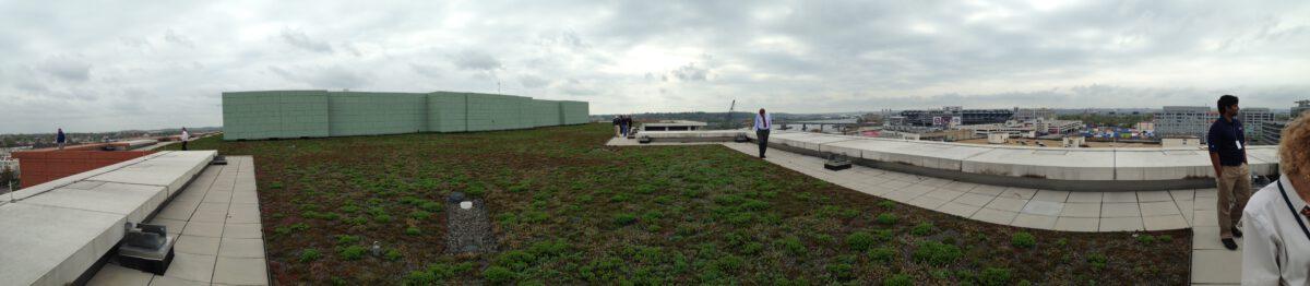 DOT green roof