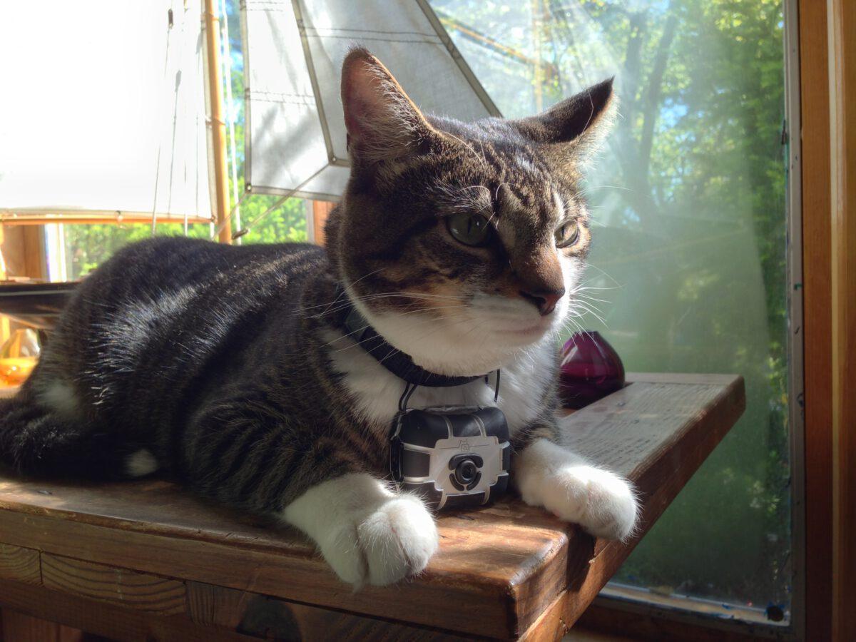 Bertie with cat cam