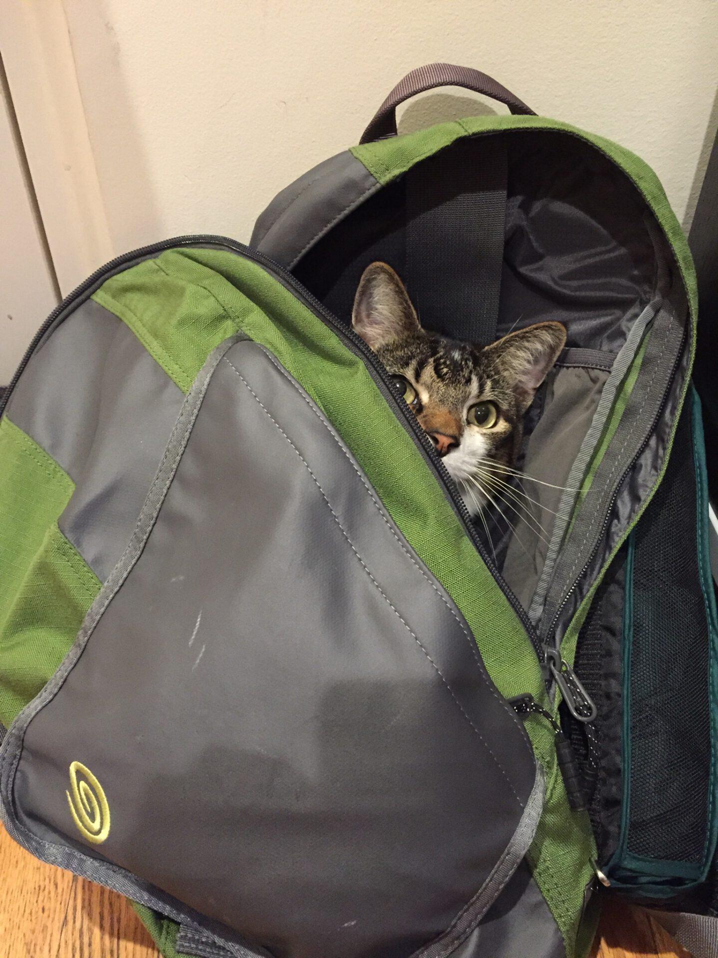 Bertie in my backpack